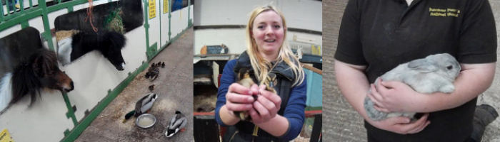 Farmer Parrs Rabbit, Pony and 2 day old Ducks