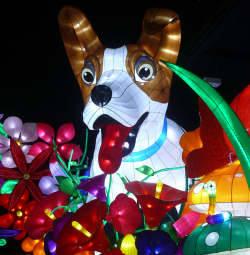 Illuminasia Daisy Dog
