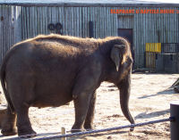 Blackpool Zoo Elephants